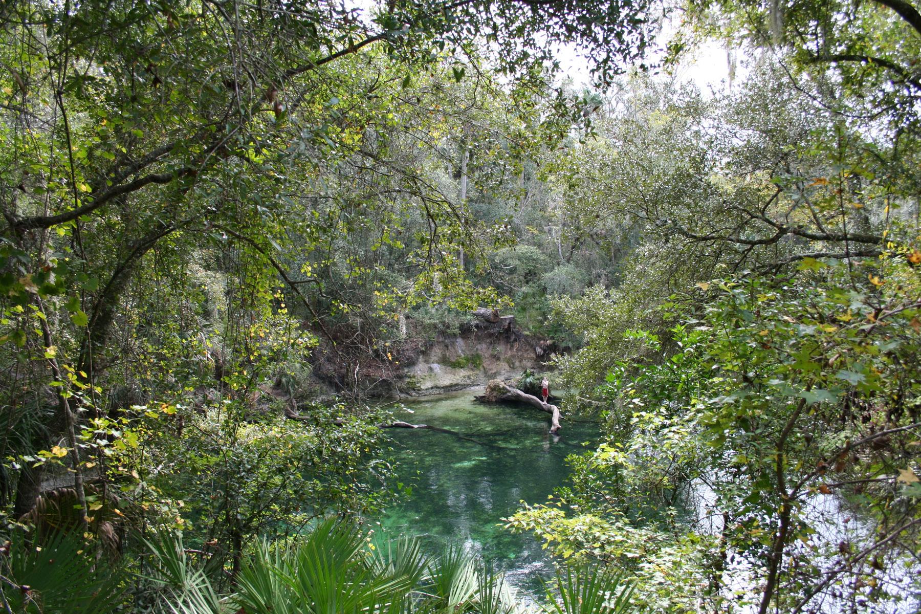 woods in Deltona