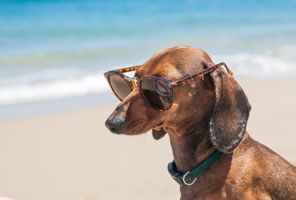 Dog on the beach with sun glasses