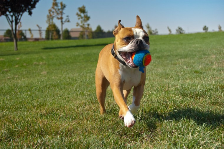 dog parks in Volusia County